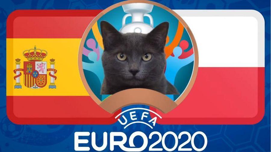 Mèo tiên tri dự đoán Tây Ban Nha vs Ba Lan - EURO 2021: Mèo Cass không tin 'Bò tót'