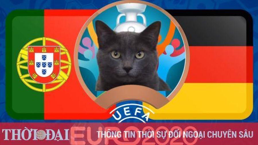 Mèo tiên tri dự đoán Bồ Đào Nha vs Đức - EURO 2021: Kết quả bất ngờ