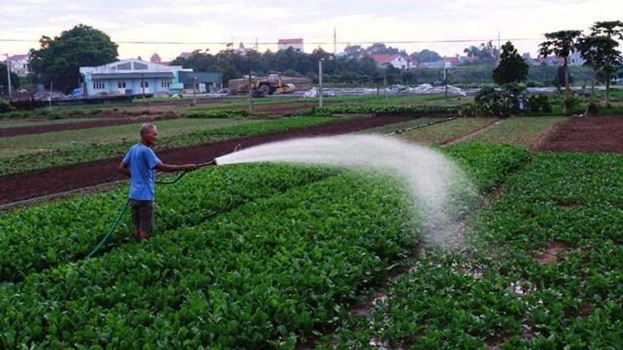 Nắng nóng gay gắt, nông dân Hà Nội xuống đồng 'tắm mát' cho rau màu từ mờ sáng