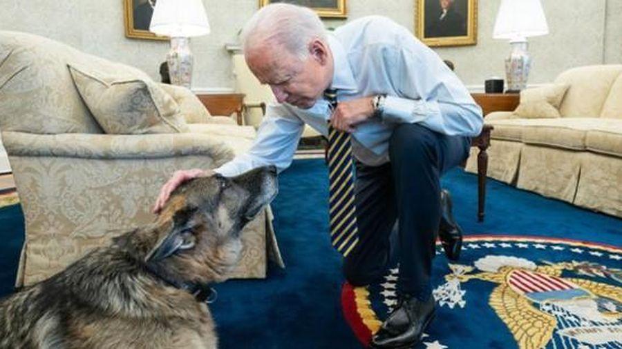 Vợ chồng tổng thống Biden bày tỏ tình yêu với 'Đệ nhất cảnh khuyển' vừa chết