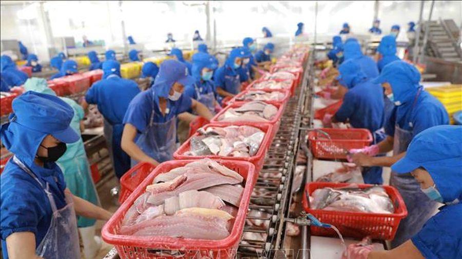 Giải pháp nào bảo tồn nguồn lợi hải sản trên biển?