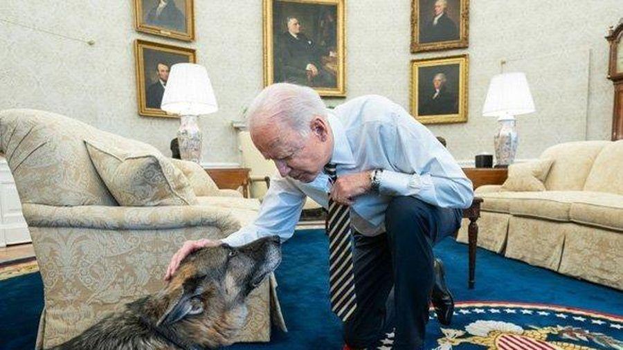 'Đệ nhất khuyển' của Tổng thống Biden qua đời