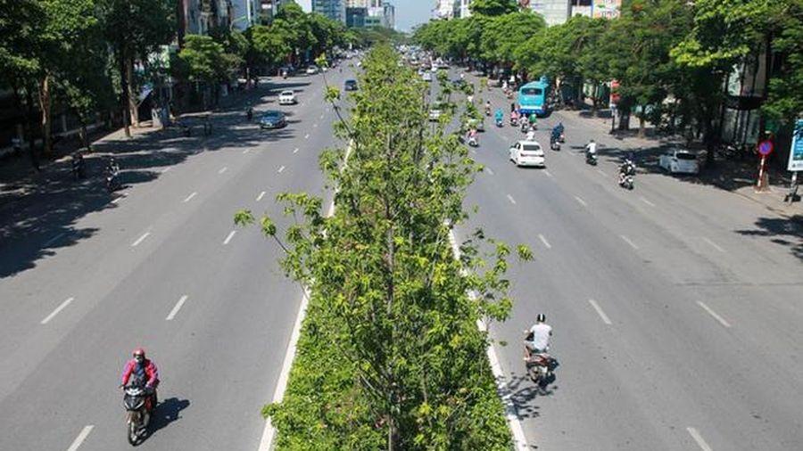 Hà Nội: Di dời hàng phong lá đỏ trong đêm để tránh nắng