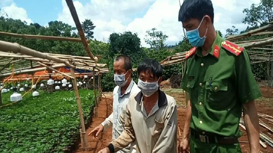 Từ TP.HCM lên Tây Nguyên trồng cần sa thuê thì bị bắt
