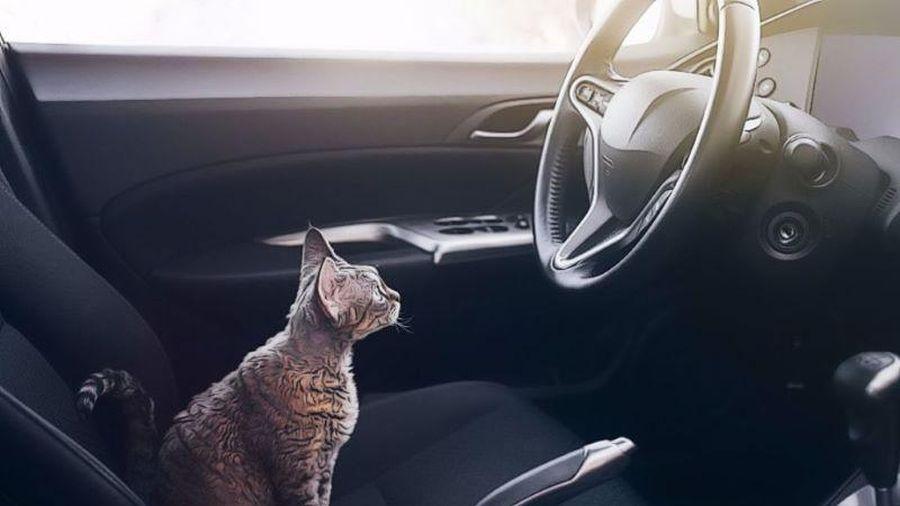 Phát hiện bất ngờ, nước tiểu mèo sẽ là nhiên liệu cho ô tô?