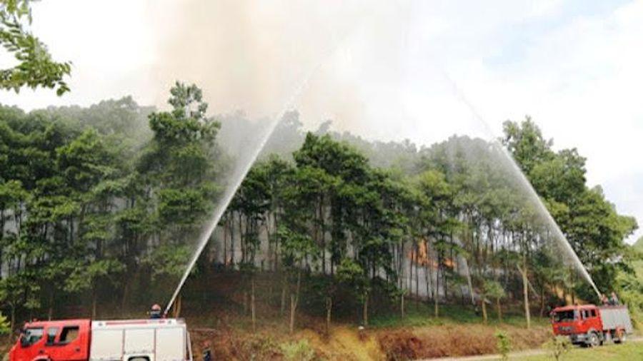 Hà Nội: Chủ động ngăn chặn nguy cơ cháy rừng do nắng nóng kéo dài