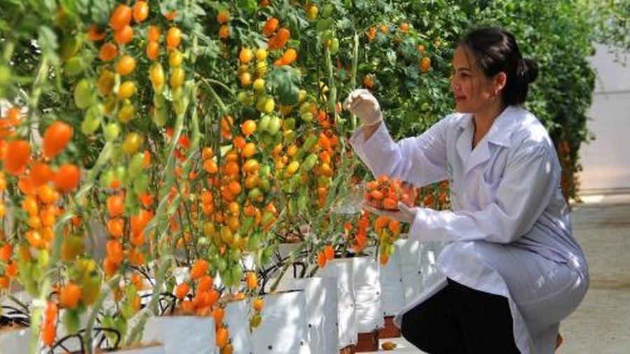 Đăk Lăk hướng tới sản xuất nông nghiệp hữu cơ