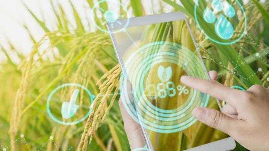 Cục BVTV và Viettel hợp tác xây dựng app 'bắt bệnh' cho lúa