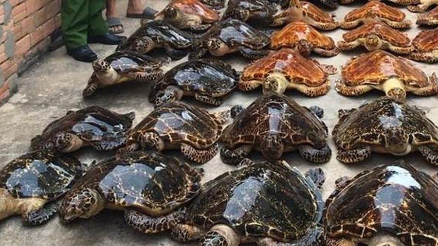 Hai kẻ buôn bán tiêu bản rùa biển lĩnh 22 năm tù
