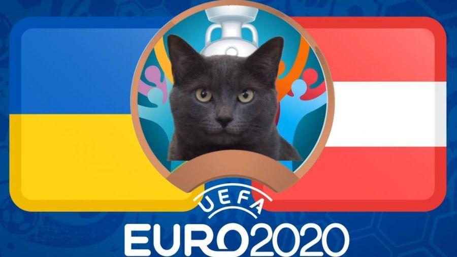 Mèo tiên tri dự đoán Ukraine vs Áo - EURO 2021: Mèo Cass chọn bất ngờ