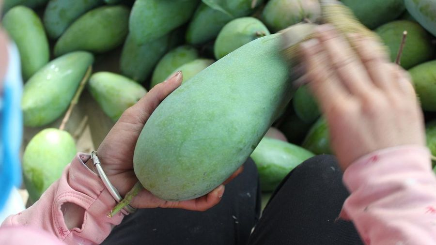 Sơn La xuất khẩu và tiêu thụ gần 7.000 tấn xoài Mường La