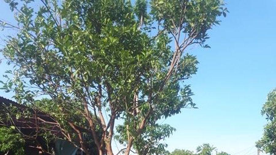 TP. Vinh: Hoa cây cảnh Nghi Ân thu tiền tỷ