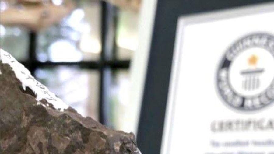 Hóa thạch trứng khủng long nhỏ nhất thế giới